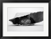 Framed Cat In A Bag