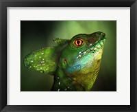 Framed Basilisca Verde