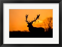 Framed Red Deer Stag Silhouette