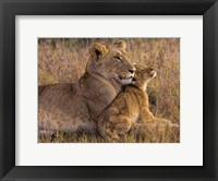 Framed Baby Lion With Mother