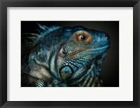 Framed Dragons Are Awake