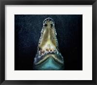 Framed Jaws