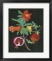 Pomegranate Study II Framed Print