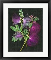 Calliandra Surinamensis I Framed Print