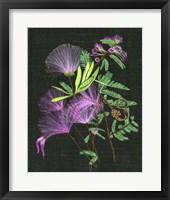 Calliandra Surinamensis II Framed Print