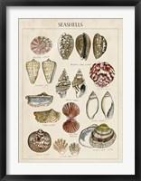 Seashell Sketch I Framed Print