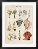 Seashell Sketch II Framed Print