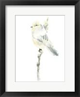 Framed Avian Impressions I