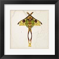 Framed Butterfly Study I