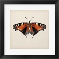 Framed Butterfly Study V