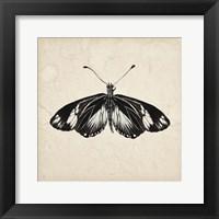 Framed Butterfly Study VI