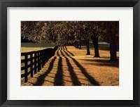Framed Chasing Shadows