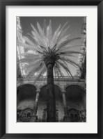 Framed Palermo