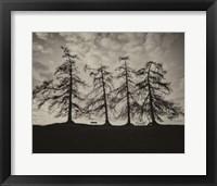 Framed Park Trees