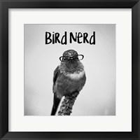 Framed Bird Nerd - Hummingbird