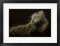 Framed Iguana Profile