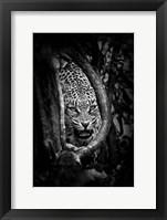 Framed Leopard's Lair