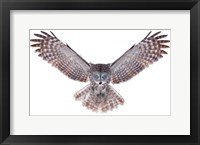 Framed Power - Great Grey Owl