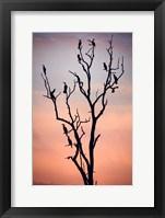 Framed Before The Sunset