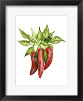 Framed Watercolor Veggie II