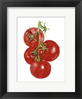 Framed Watercolor Veggie IV