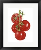 Framed Watercolor Veggie IV