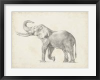 Framed Elephant Sketch I