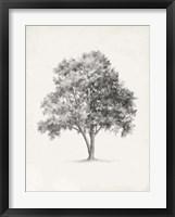 Framed Vintage Arbor Study I