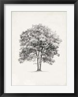 Framed Vintage Arbor Study II