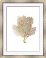 Framed Gold Foil Sea Fan II