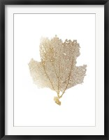 Framed Gold Foil Sea Fan II