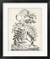 Framed Scenic Botanical I