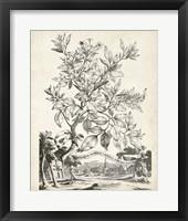 Framed Scenic Botanical II