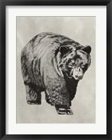 Framed Pen & Ink Bear I