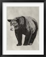 Framed Pen & Ink Bear II