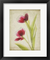 Framed Parchment Flowers III
