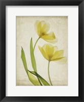 Framed Parchment Flowers IV