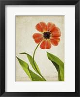 Framed Parchment Flowers V