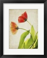 Framed Parchment Flowers VI