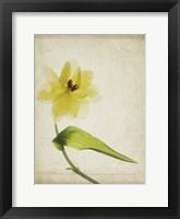 Framed Parchment Flowers VII