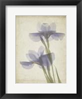 Parchment Flowers VIII Framed Print