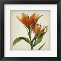 Framed Parchment Flowers X