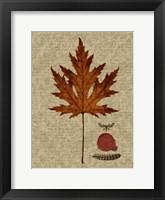 Framed Autumn Leaf I