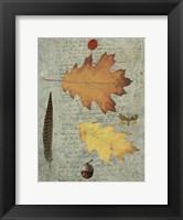 Framed Autumn Leaf III