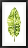 Framed Banana Leaf Study I