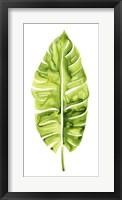 Banana Leaf Study I Framed Print