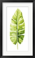 Banana Leaf Study II Framed Print