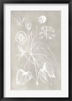 Framed Botanical Schematic II