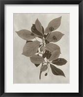 Framed Arbor Specimen I
