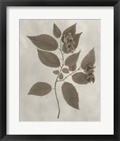 Framed Arbor Specimen II
